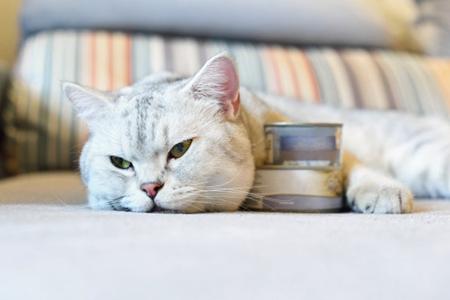 猫主人买猫粮看健康配方,根据这5点配方来