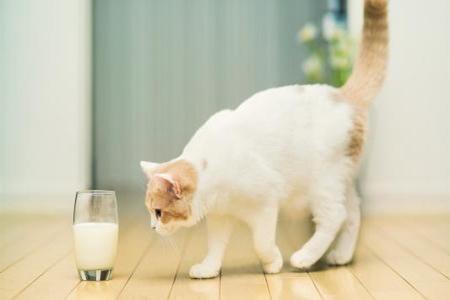 宠物猫的饮食禁忌,铲屎官要须谨慎饲喂的五种食物