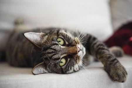 宠物猫睁一只眼闭一只眼,可能是有这6种情况