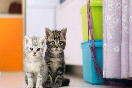 猫猫有异常一定要引起重视,不然会容易得疾病