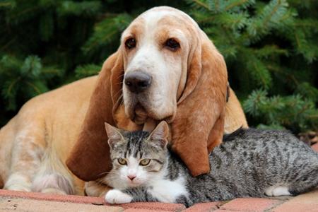 宠物狗结肠炎的治疗方案,缓解狗狗疾病痛苦