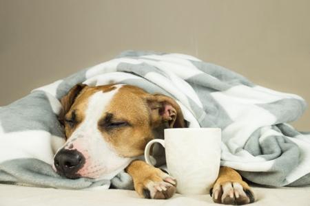狗狗胰腺炎怎么治疗,这三个胰腺炎治疗方法