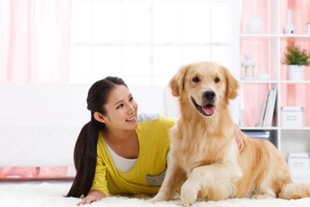 家庭宠物狗胃不舒服时,这些补救措施缓解疼痛