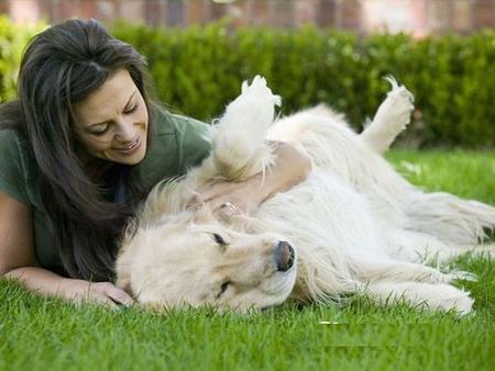 夏日炎炎一定要注意避免狗儿中暑