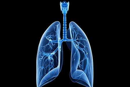 人的肺如何清洗?坚持喝这3种茶能起到清洁肺部
