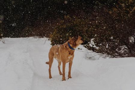 为什么小狗在雪地不会被冻伤