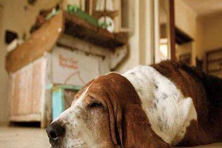 给大家分享老年犬的一些日常护理知识
