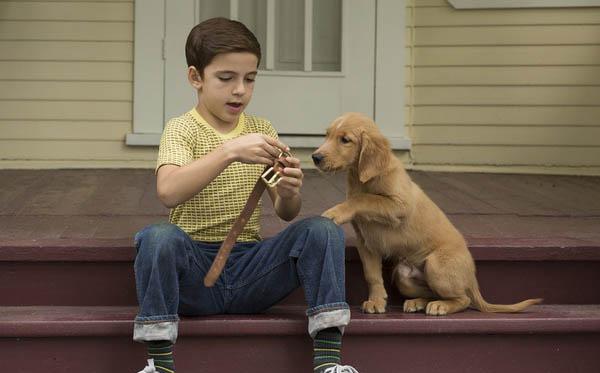一条狗的使命贝利轮回了几次揭晓 四个故事泪点十足