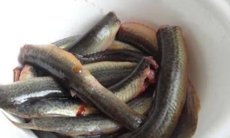 泥鳅的营养价值和功效有哪些 泥鳅怎么做好吃?