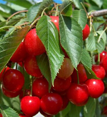 美容护肤小窍门 10种水果媲美顶级护肤品