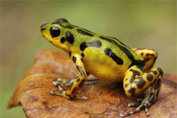 盘点世界上最毒的九种动物 你都敢碰吗?