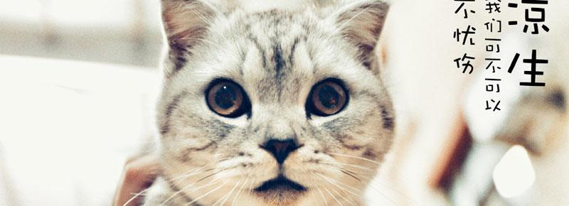 凉生中冬菇是什么猫