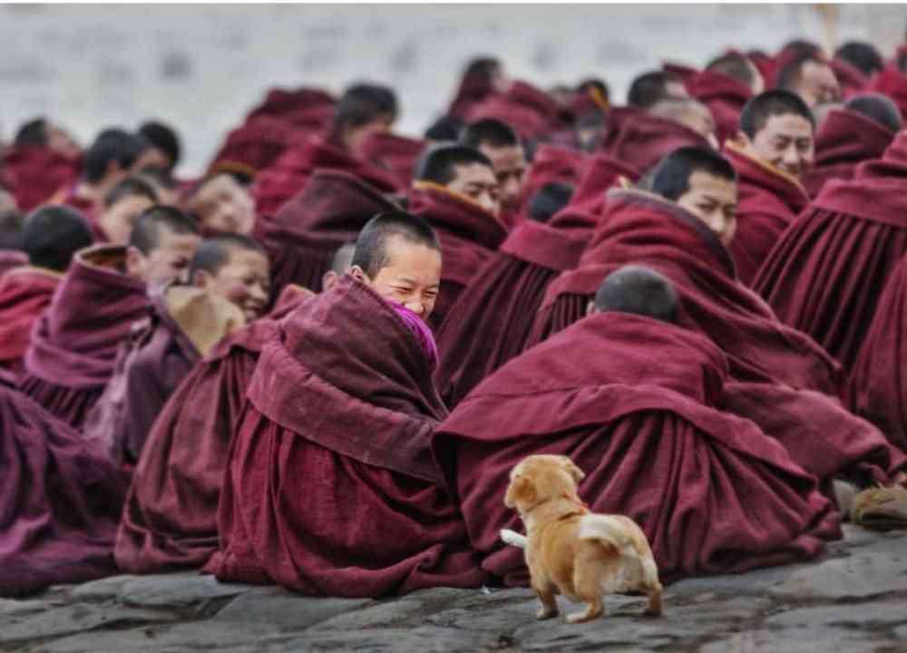 小狗的照片 六张超治愈的狗狗照片,你觉得哪张最美?