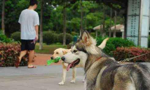 狗狗走丢了 狗狗走丢了,我该怎么办?