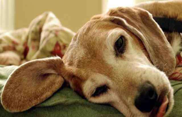 """狗晚上呜呜叫跟哭一样 狗狗经常""""呜呜""""叫的5大原因,一旦发现,你就要重视了!"""