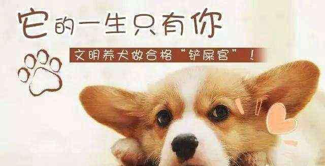 文明养狗倡议书 路南区文明养犬倡议书