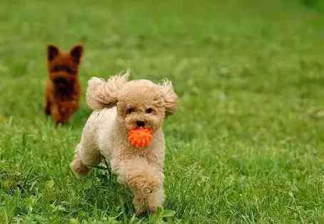 狗狗搜 狗狗搜东西训练方法