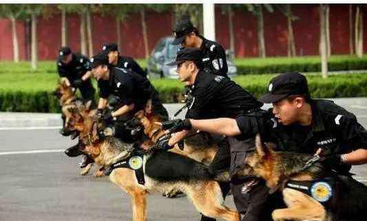 警犬吃什么狗粮 中大型犬中,不能当警犬的狗狗有以下5种,不看看你怎么知道是谁