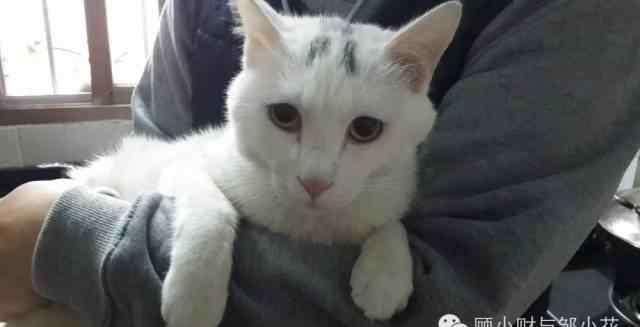 宠物猫领养 猫咪领养国际惯例