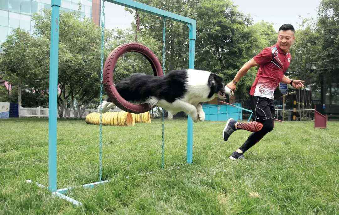 宠物训练师 资深宠物训练师:狗身上99%的问题,其实根本是人的问题