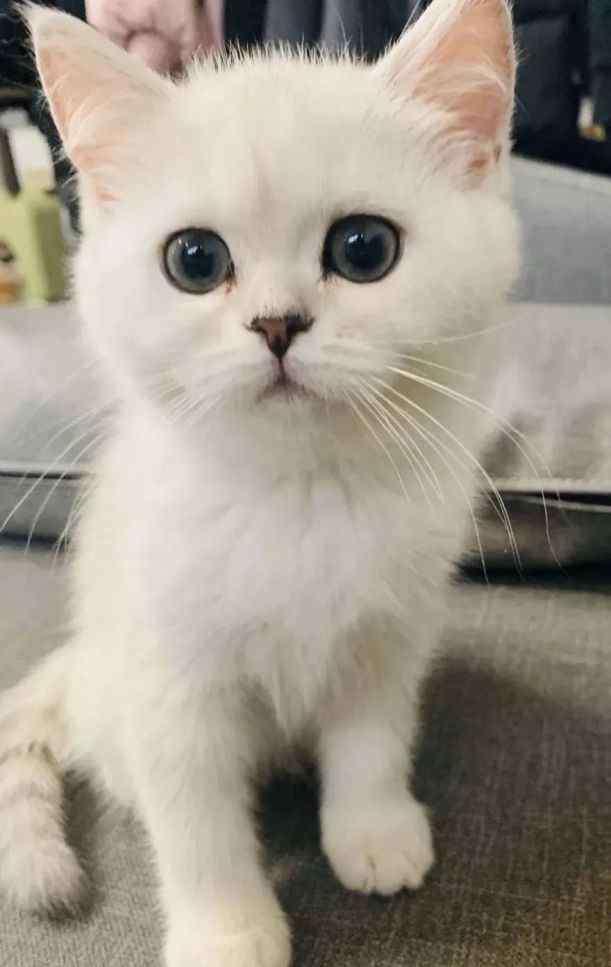 宠物回国 如果在韩国养了宠物,如何带宠物回国?