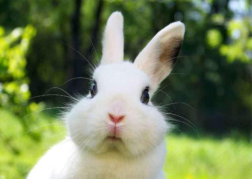 宠物兔好养吗 夏天宠物兔要怎么养?不好好掌握这几点,可就会害了它!