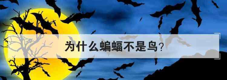 蝙蝠是鸟吗 为什么蝙蝠不是鸟