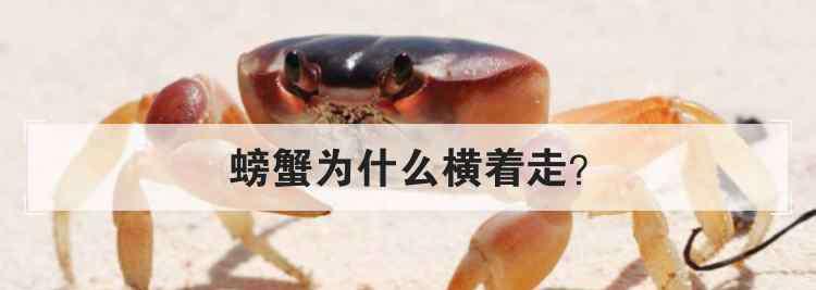 螃蟹为什么横着走 螃蟹为什么横着走