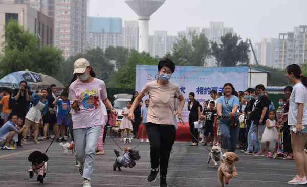 """聪明的宠物狗 郑州社区举办文明养犬宣传活动 引来百余只宠物狗""""秀才艺"""""""