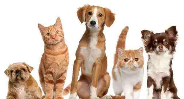 宠物医疗器械 超百亿的宠物医疗机构市场,未来大有可为