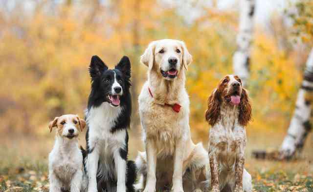 养宠物的好处 养狗原来有这么多的好处,怪不得朋友们都开始养狗