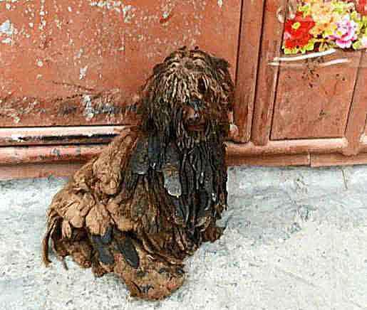 宠物狗寄养 宠物狗寄养在父母家,以为会认真饲养,一年后,比土狗还不如