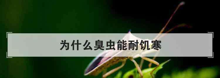 为什么臭虫怕香水 为什么臭虫能耐饥寒