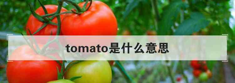 tomato什么意思 tomato是什么意思