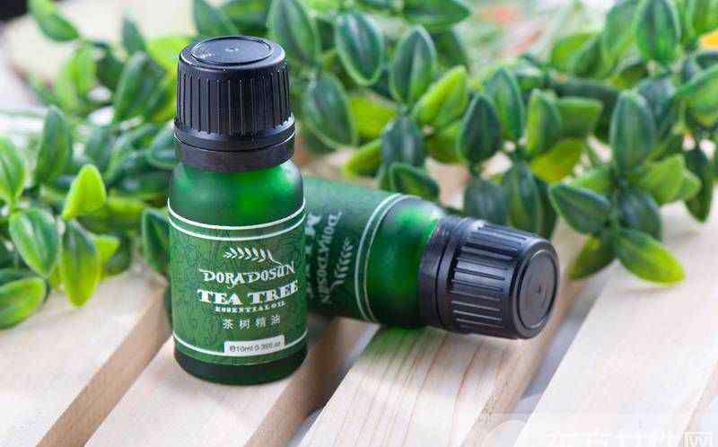 茶树精油的功效与作用 茶树精油的四大使用方法
