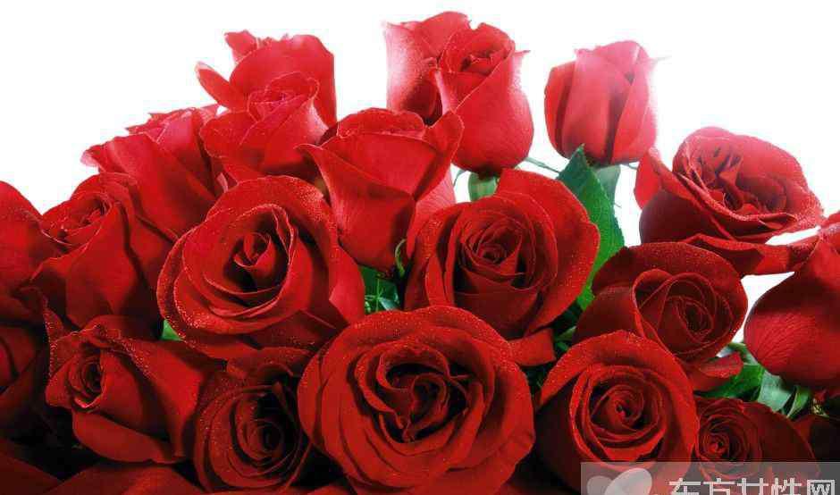 玫瑰花怎么保存时间长  玫瑰花的花语是什么
