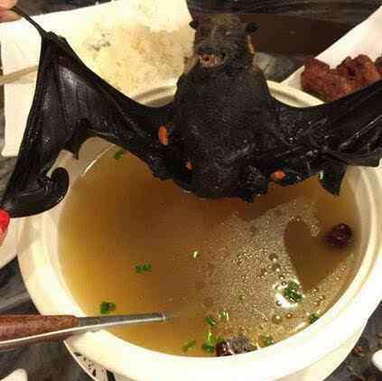 动物世界蝙蝠视频 蝙蝠肉能吃吗 吃蝙蝠肉视频