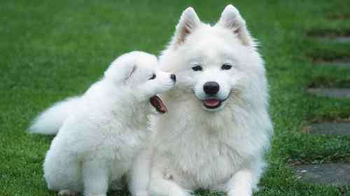 买什么狗好 买什么狗好养又便宜 狗养久了成精