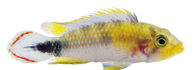 粘液 为什么鱼身上会有粘液?