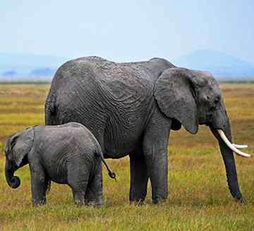 跳起来 大象能跳起来吗?