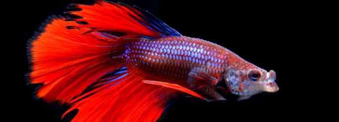 鱼儿 鱼为什么能在水里游?