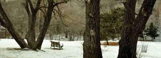 冬天冻不死的常绿植物 冬天树木为什么冻不死?