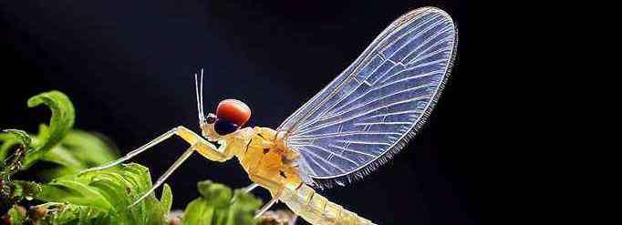 趋光性 为什么昆虫会趋光?