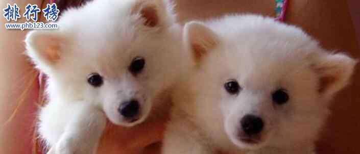 家里养什么狗好 什么狗最干净最好养?楼房最适合养的狗排行榜