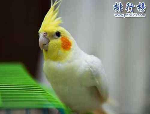 小太阳鹦鹉哪个品种好 盘点常见的十种鹦鹉,第七最长寿,第一最可爱