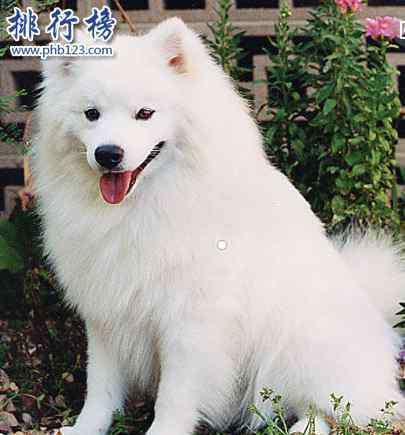 可爱的狗狗 世界十大可爱温顺狗狗排名,聪明温顺适合家养的狗有哪些?