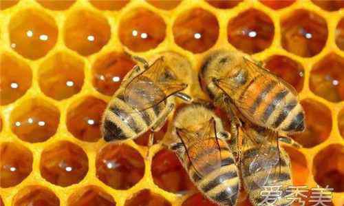 蜂皇浆的作用与功效 蜂王浆的作用与功效 蜂王浆能去皱纹吗