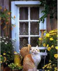 牙齿发黄怎么办 帮帮忙看看,猫的牙齿变黄怎么办