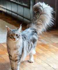 猫为什么被蛇咬了没事 为什么猫咪不怕蛇,论反应速度我只服喵星人