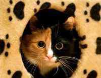 没有猫粮给猫吃什么 它该吃什么,刚捡回来的流浪猫补充营养要吃什么